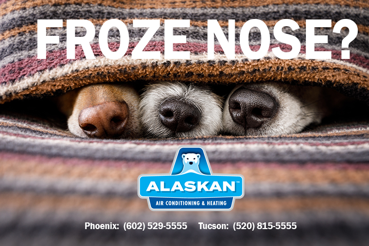 Froze Nose?